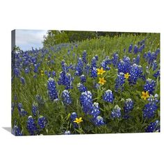 Global Gallery Nature Photographs Bluebonnet and Texas Yellowstar Meadow Cedar Hill State Park Texas by Tim Fitzharris Photographic Print on Canvas...