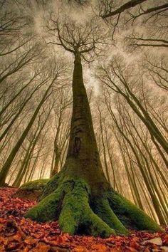 Dark Hedges, Northern Ireland