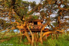Kameeldoorn Tree House - Google Search