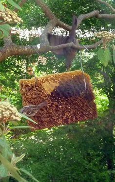 Fjonka: Brutwaben-Vogelfütterung Freundlich, Bird Feeders, Advent, Outdoor Decor, Honey, Animales, Teacup Bird Feeders