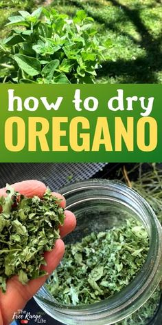 Do you have a garden full of oregano? Learn how to dry oregano so you can enjoy that great oregano taste in dishes and meals all year long! Oregano is a wonderful culinary and medicinal herb with a ton of uses, learn how to preserve it for all year use! Oregano Plant, How To Dry Oregano, Herb Recipes, Canning Recipes, Oregano Recipes, Recipe With Oregano, Cooking Tips, Gardens, Gourmet