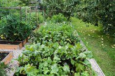 blog mini ogrodniczy, tworzenie swojego mini ogrodu