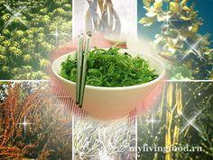 morskie ovoshhi Морские овощи – доступный суперфуд!