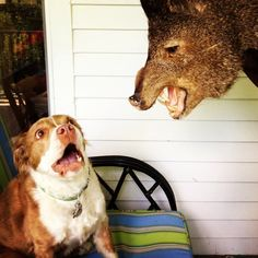40 most awkward dog photos - This dog who forgot what was real and what was fake.