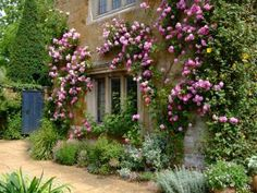 Rosa 'Seven Sisters' - South West Terrace, Coton Manor Garden, Northamptonshire. So beautifully English