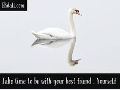 Take time to be with your best friend. Your Best Friend, Best Friends, Book Reviews For Kids, Charts For Kids, Primary School, Wall Design, Childrens Books, Kids Toys, Friendship
