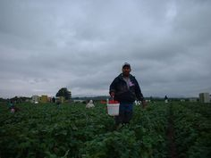 Fresh Fruit Broken Bodies: Migrant Farmworkers in the United States
