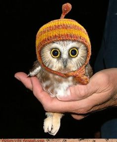 It's an owl in a Jayne hat!