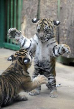 """* * """" I stands to challenge yoo to a faux fight ! """""""