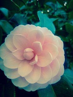 Market Dashboard - #gardenphotography #BeautifulNature #Naturephotography #flower #stilllife #Pink #Nature #Flowers #Plants #Garden #photography #product #depthoffield #petals #flowerpetals #eyeem #eyeemmarket