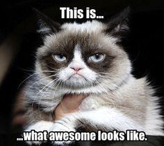 Grumpy national Cat day to all cats and kitties Grumpy Cat… Grumpy Cat Quotes, Funny Grumpy Cat Memes, Grumpy Cats, Pet Quotes, Funny Animal Pictures, Funny Animals, Cute Animals, Funny Horses, Crazy Cat Lady