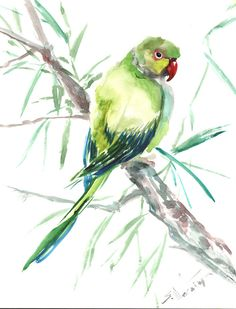 Parakeet original watercolor painting by Suren Nersisyan