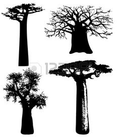 baobabs - Vector photo