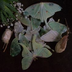 The Butterfly Babe Catty Noir, Slytherin Aesthetic, Forest Fairy, Goblin, Faeries, Aesthetic Pictures, Plant Leaves, Butterfly, Green