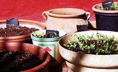 Garden Pests, Garden Planters, Garden Tools, Organic Gardening, Gardening Tips, Indoor Gardening, Vegetable Gardening, Growing Gardens, Garden Equipment