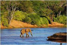 Estos bosques que bordean los ríos son conocidos como bosques galerías y constituyen verdaderos trozos de selva colocados en las sabanas.