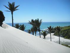 Sand dunes Kaihoka,  golden bay
