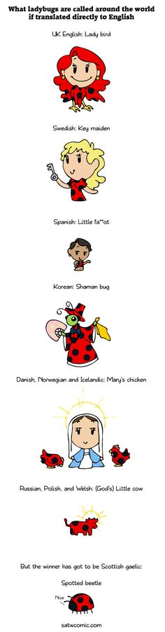 Ladybug around the world