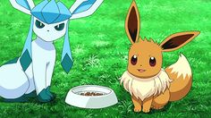 Eevee and Glaceon gif