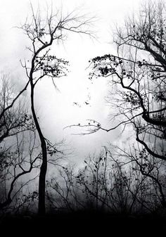 This is a picture of a cloudy day with a white sky and there is some trees around the scenery and in the middle of two of them makes a face with the branches. Most people just find this as an illusion and that it looks really cool. I see it more than that with a deeper meaning. I see it showing that trees and plant life are living but just because they are not human, people tend to forget that they are alive and that we need to take care of it just as a human.