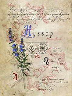 BOS ~ Hyssop herb page