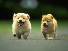 Google Afbeeldingen resultaat voor http://www.happied.com/images/posts/1080/original_cute_puppies_racing_by_i_am_jessica-d4hn22r.jpg%3F1343317596