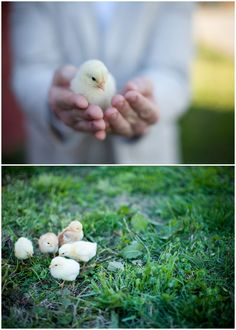 So cute! i want to hold a little chick!