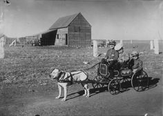 Boys in a dog-drawn wagon, Dorrance, Kansas c1910