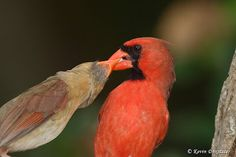 Fantastic Utah bird photographer Kevin Doxstater shares this delightful post about Birds being Birds!