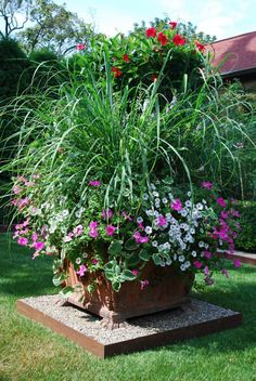 Lemon grass and Petunias - Help keep Mosquitos away and look pretty!