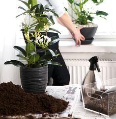 De tio bästa blommande krukväxterna för nybörjare | Wexthuset