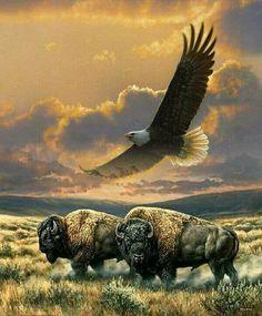 Native American Paintings, Native American Pictures, Beautiful Birds, Animals Beautiful, Buffalo Pictures, Buffalo Art, Buffalo Painting, Eagle Pictures, American Animals