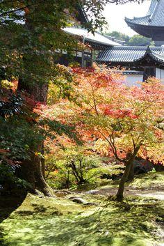 東福寺 Toufukuji, temple, Autumn foliage, Autumn colours, Kyoto