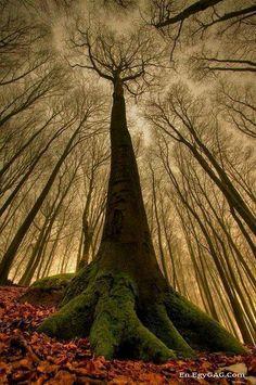 The beautifuliest Autum tree i ever see