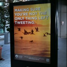 Tweet and save the birds