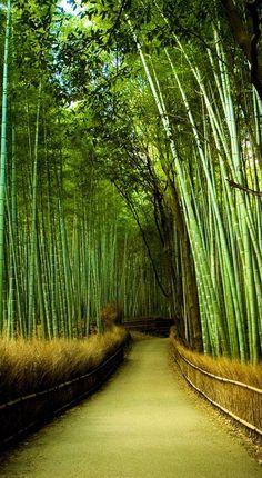 Zurücklehnen, Entspannen & Genießen auf einer Traumreise in den Bambus Wald