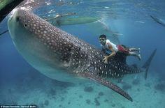 Oslob, Cebu Philippines  Swim with whale sharks