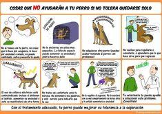 Si no soporta quedarse solo, evita hacer cualquiera de estas: | 17 Datos gráficos que todo amante de los perros debe conocer