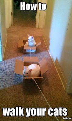 Funny how to walk your cats joke meme photo