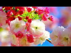 🌷 Giovanni Marradi - Just For You Flower Crafts, Just For You, Flowers, Instagram, Jewelry, Heavenly, Youtube, Animation, Wallpapers