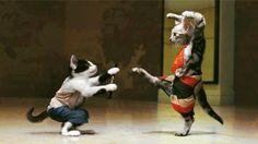 Kungfu cat