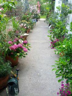 """Si Mo Ne´s Blog: Summertime. Den Hof einfach mit """"grünen"""" Töpfen bepflanzen!"""
