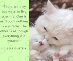 """""""Ci sono solo due modi per vivere la tua vita. Uno è come se niente è un miracolo. L'altro è come se tutto è un miracolo. """""""