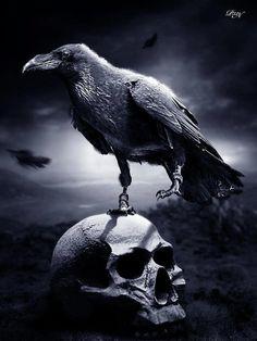 Cuervo sobre calabera
