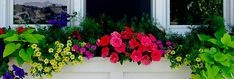 Want to make your own window box? Find out exactly how to do it by reading this article