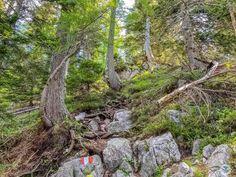Wanderung zur Ferlacher Spitze – die kleine Schwester des Mittagskogels Trunks, Terrarium, Plants, Miniature, Gardening, Amigurumi, Villach, Little Ones, Baby Sister