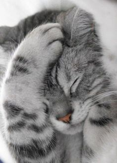 Oooohhhh so cute!