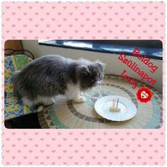 Lucy 3 éves ❤