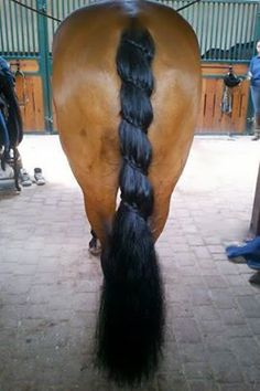 Tail braid.
