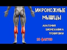 ИКРЫ. 10 Фактов. Биомеханика, Тренировки, Анатомия. - YouTube